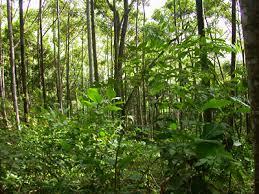 Sumber Daya Alam Hayati Tindak Pidana Konservasi Sumber Daya Alam Hayati